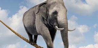 elefante su corda